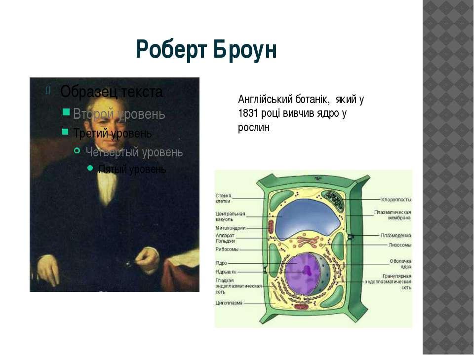 Роберт Броун Англійський ботанік, який у 1831 році вивчив ядро у рослин