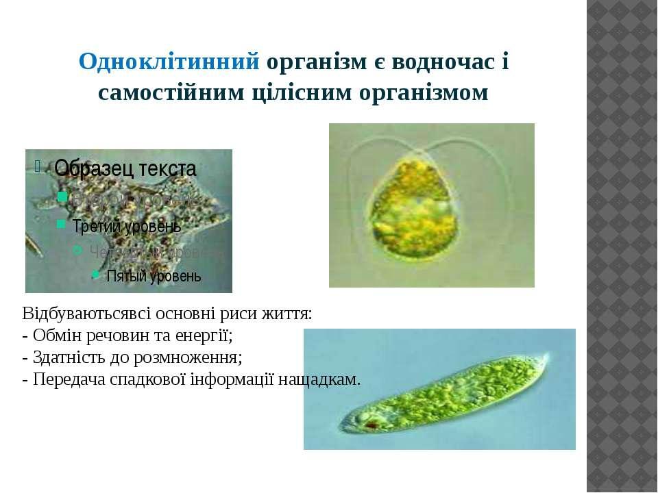 Одноклітинний організм є водночас і самостійним цілісним організмом Відбувают...