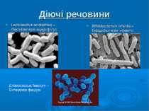 Діючі речовини Lactobacillus acidophilus – Лактобактерія ацидофілус Bifidobac...