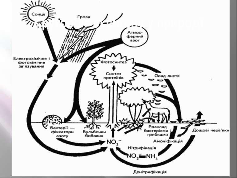 Кругообіг оксигену у природі