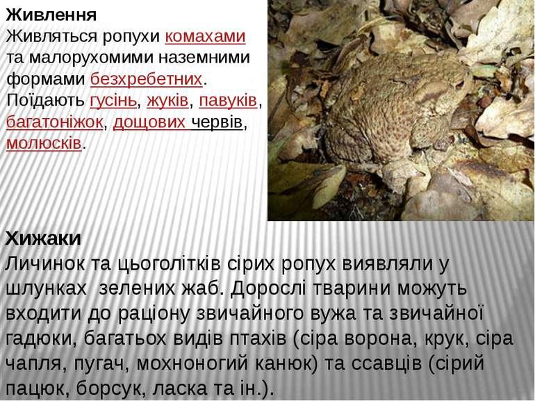 Живлення Живляться ропухи комахами та малорухомими наземними формами безхребе...