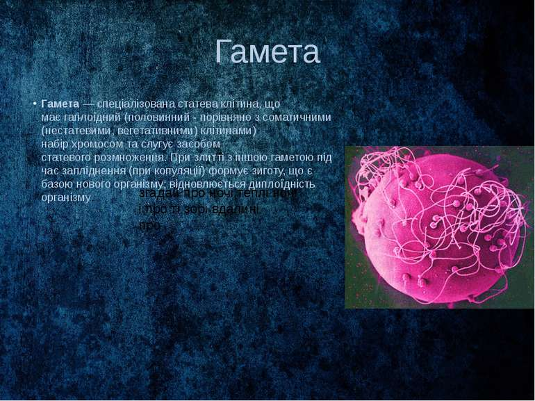 Гамета Гамета— спеціалізованастатеваклітина, що маєгаплоїдний(половинний...