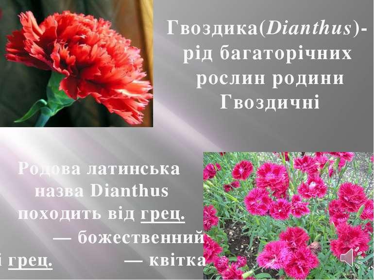 Гвоздика(Dianthus)- рід багаторічних рослин родини Гвоздичні Родова латинська...
