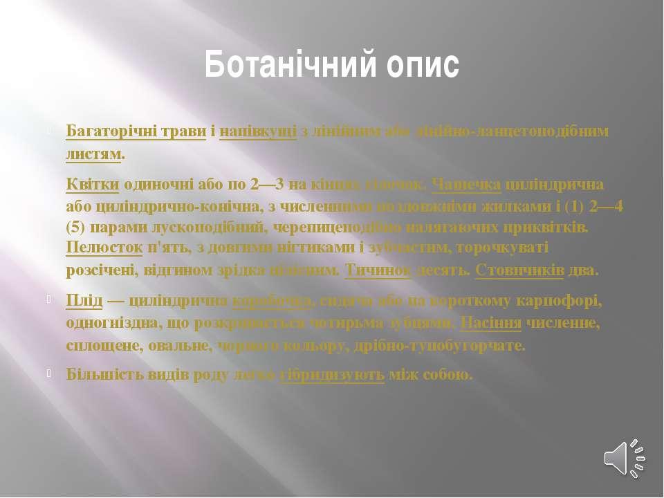 Ботанічний опис Багаторічні травиінапівкущіз лінійним або лінійно-ланцетоп...