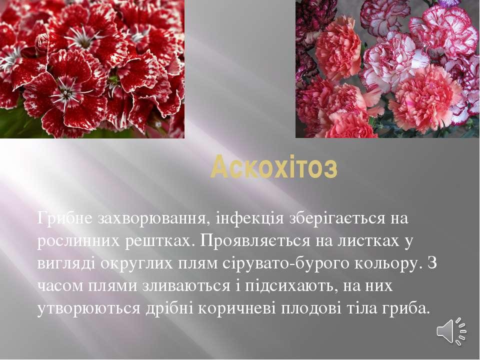 Аскохітоз Грибне захворювання, інфекція зберігається на рослинних рештках. Пр...