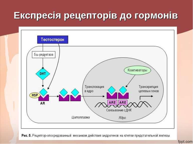 Експресія рецепторів до гормонів
