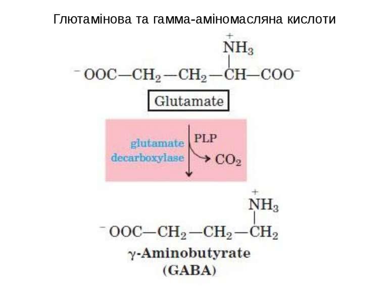 Глютамінова та гамма-аміномасляна кислоти
