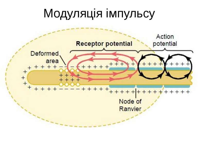 Модуляція імпульсу
