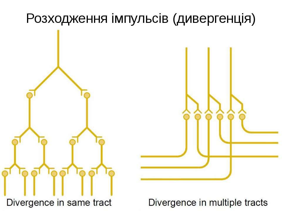 Розходження імпульсів (дивергенція)