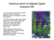 Загальні риси та будова бурих водоростей 1. Пластинчаста слань має складну бу...
