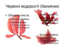 Червоні водорості (багрянки)
