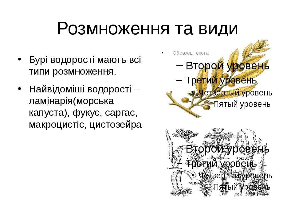 Розмноження та види Бурі водорості мають всі типи розмноження. Найвідоміші во...