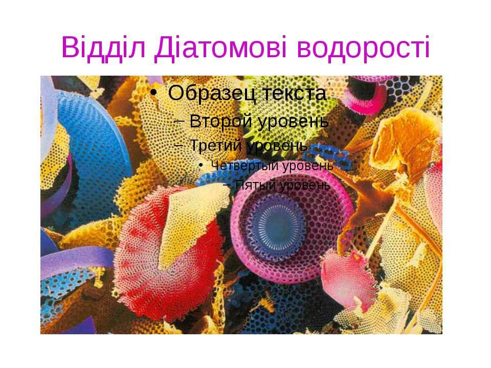 Відділ Діатомові водорості