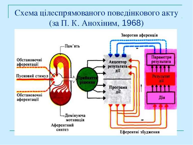 Схема цілеспрямованого поведінкового акту (за П. К. Анохіним, 1968)