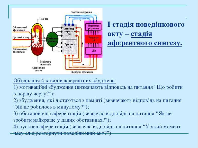 І стадія поведінкового акту – стадія аферентного синтезу. Об'єднання 4-х виді...