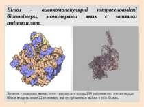 Білки – високомолекулярні нітрогеновмісні біополімери, мономерами яких є зали...