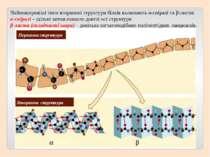 Первинна структура Вторинна структура Найпоширеніші типи вторинної структури ...