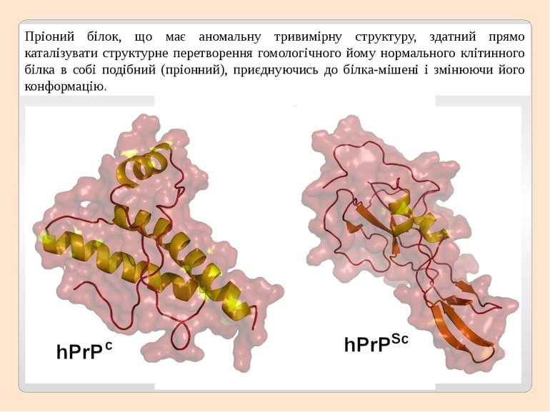 Пріоний білок, що має аномальну тривимірну структуру, здатний прямо каталізув...