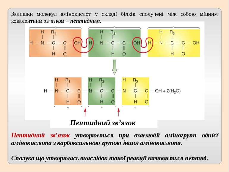 Пептидний зв'язок утворюється при взаємодії аміногрупи однієї амінокислота з ...