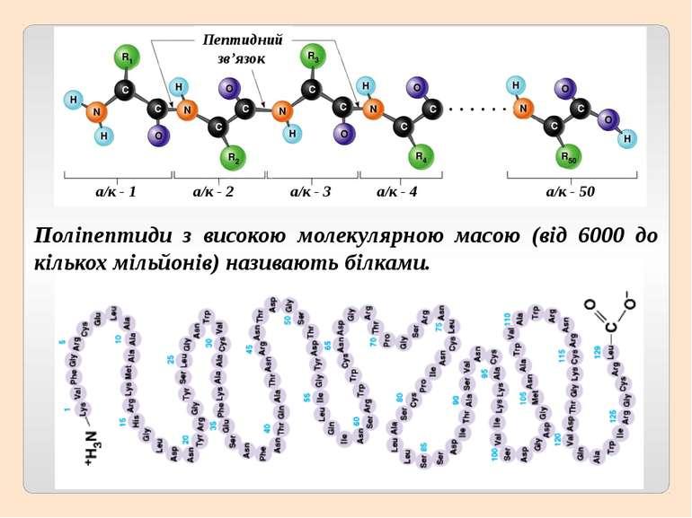 Поліпептиди з високою молекулярною масою (від 6000 до кількох мільйонів) нази...