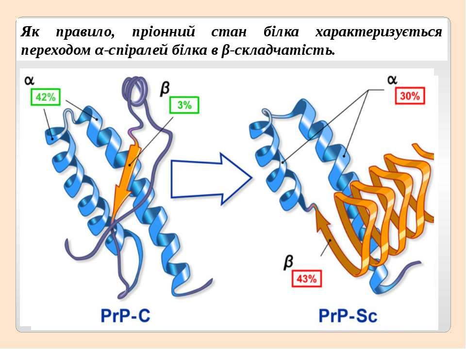 Як правило, пріонний стан білка характеризується переходом α-спіралей білка в...