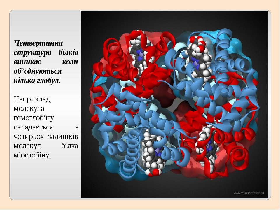 Четвертинна структура білків виникає коли об'єднуються кілька глобул. Наприкл...