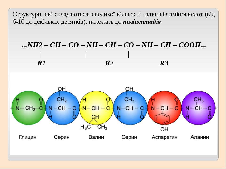 Структури, які складаються з великої кількості залишків амінокислот (від 6-10...