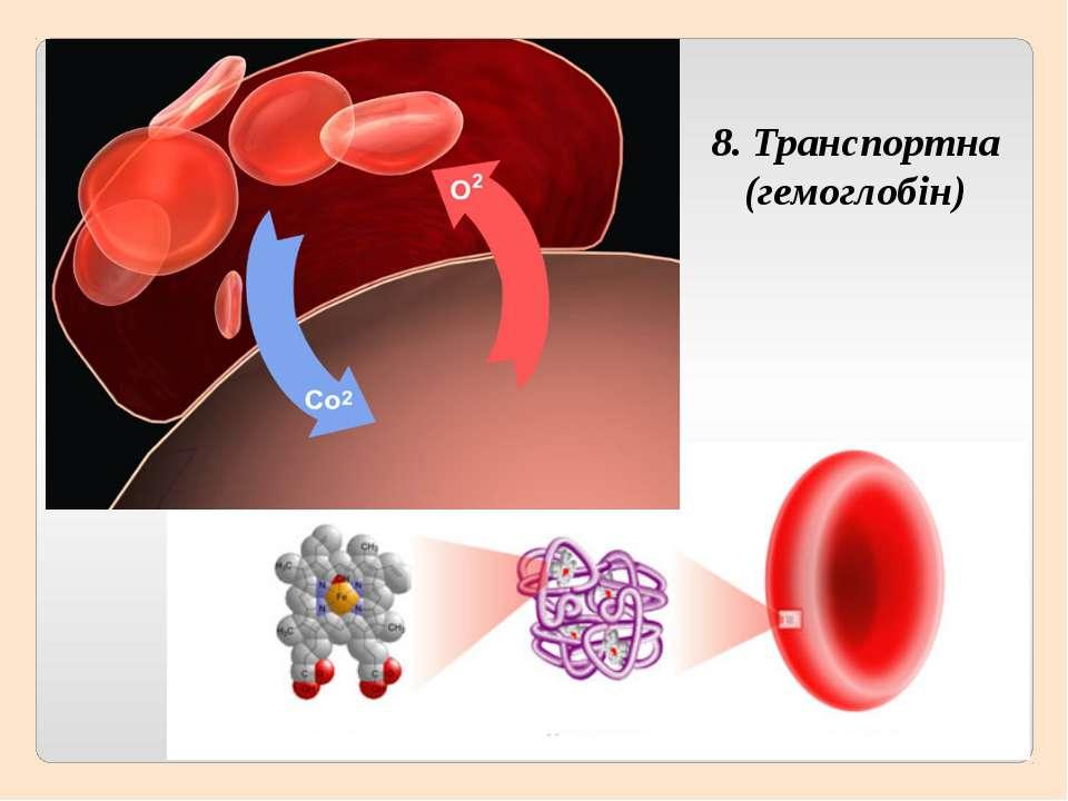 8. Транспортна (гемоглобін)
