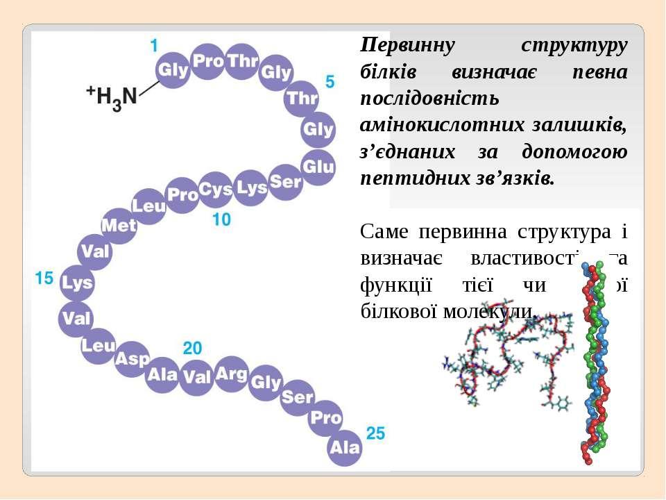 Первинну структуру білків визначає певна послідовність амінокислотних залишкі...