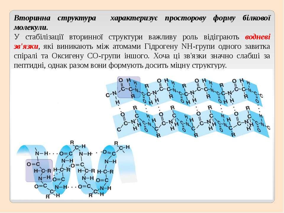 Вторинна структура характеризує просторову форму білкової молекули. У стабілі...