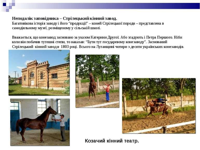 Неподалік заповідника – Стрілецький кінний завод. Багатовікова історія заводу...