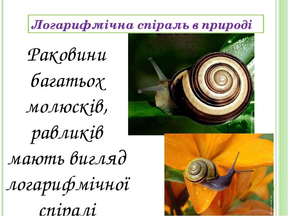 Логарифмічна спіраль в природі Раковини багатьох молюскiв, равликiв мають виг...