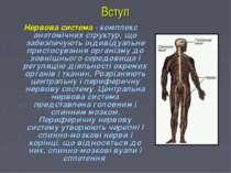 Вступ Нервова система- комплекс анатомічних структур, що забезпечують індиві...