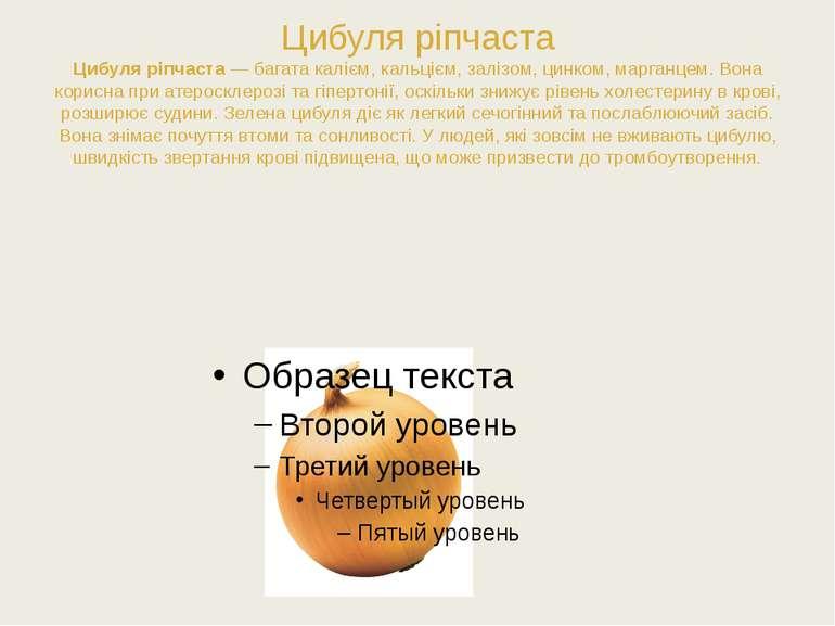 Цибуля ріпчаста Цибуля ріпчаста— багата калієм, кальцієм, залізом, цинком, м...