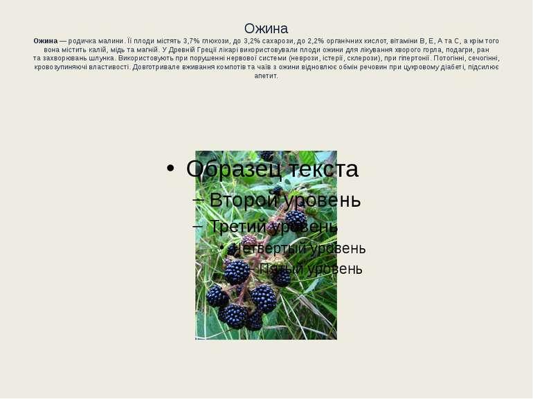 Ожина Ожина— родичка малини. Їїплоди містять 3,7%глюкози, до3,2%сахарози...