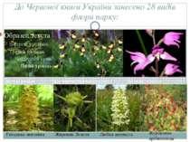 ДоЧервоної книги Українизанесено 28 видів флори парку: Береза низька Зозули...