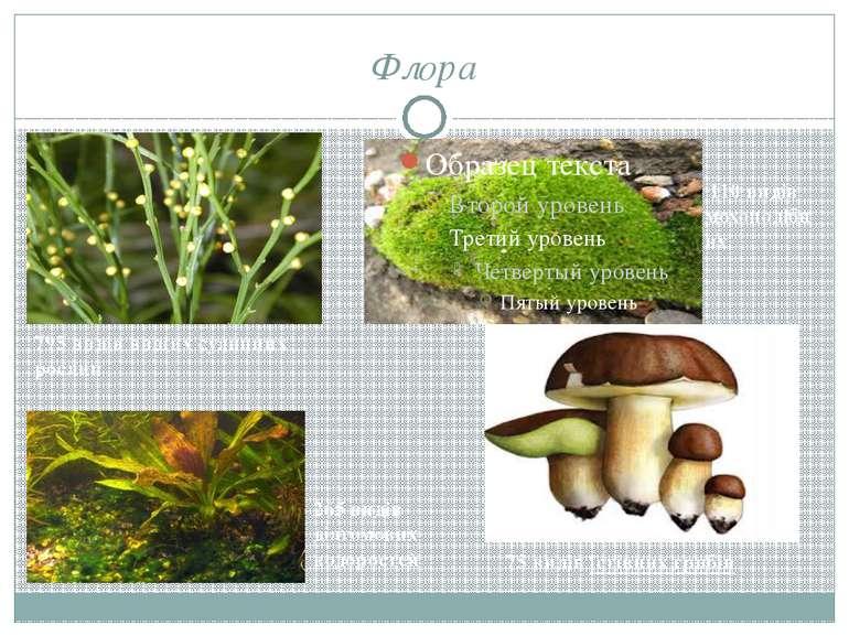 Флора 795 видів вищих судинних рослин 265 видів діатомових водоростей 110 ви...