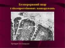 Безперервний шар глікопротеїнових нашарувань Препарат Л.Н.Бандурко
