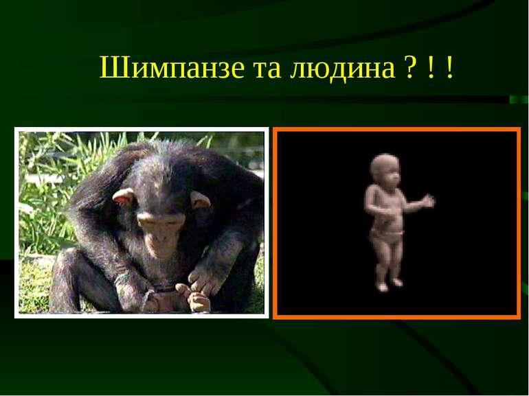 Шимпанзе та людина ? ! !