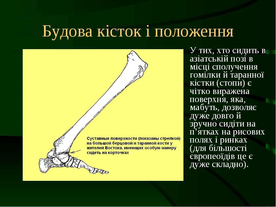 Будова кісток і положення У тих, хто сидить в азіатській позі в місці сполуче...