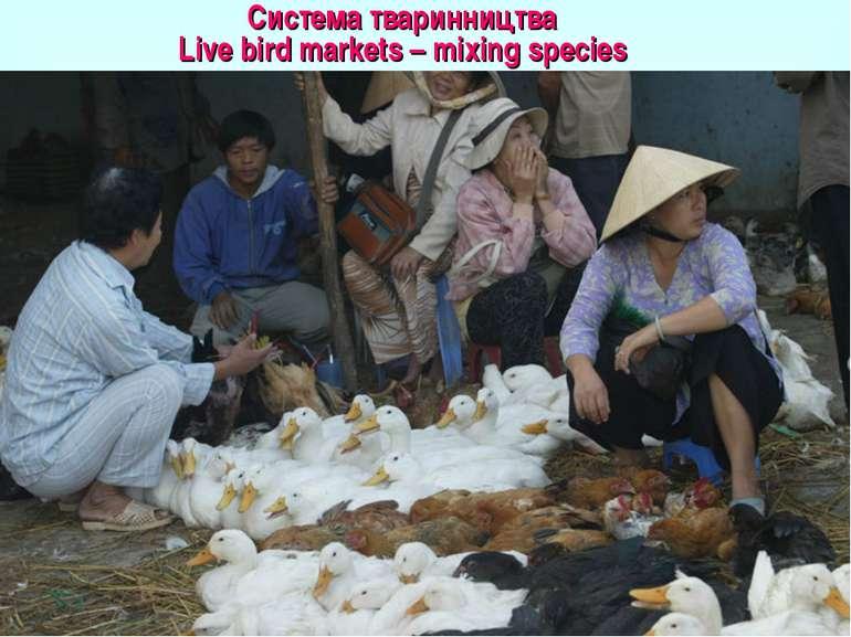 Система тваринництва Live bird markets – mixing species