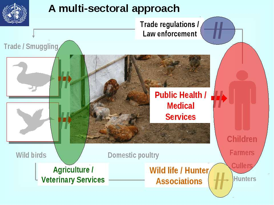 A multi-sectoral approach Trade / Smuggling Wild birds Domestic poultry Child...