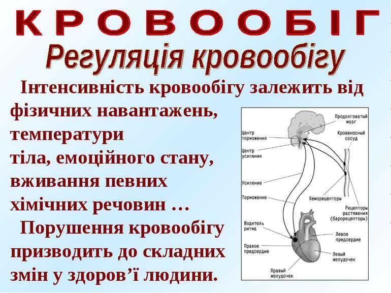 Інтенсивність кровообігу залежить від фізичних навантажень, температури тіла,...