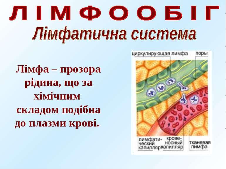 Лімфа – прозора рідина, що за хімічним складом подібна до плазми крові.