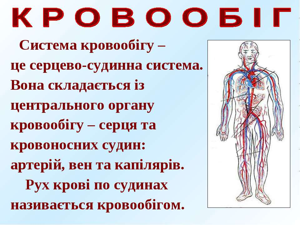 Система кровообігу – це серцево-судинна система. Вона складається із централь...