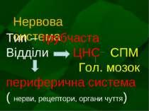 Нервова система Тип – трубчаста Відділи ЦНС СПМ Гол. мозок периферична систем...