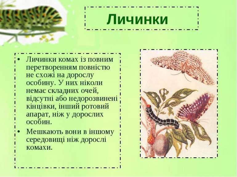 Личинки комах із повним перетворенням повністю не схожі на дорослу особину. У...