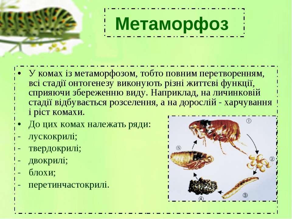У комах із метаморфозом, тобто повним перетворенням, всі стадіїонтогенезу ви...