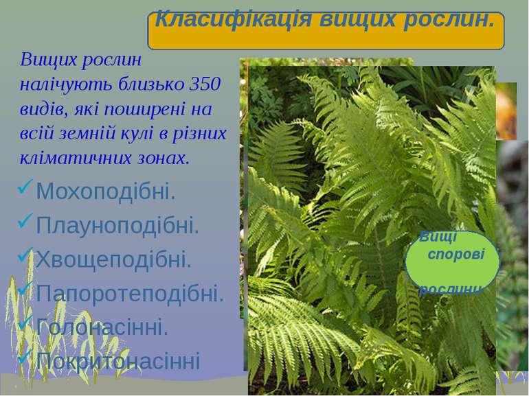 Вищих рослин налічують близько 350 видів, які поширені на всій земній кулі в ...