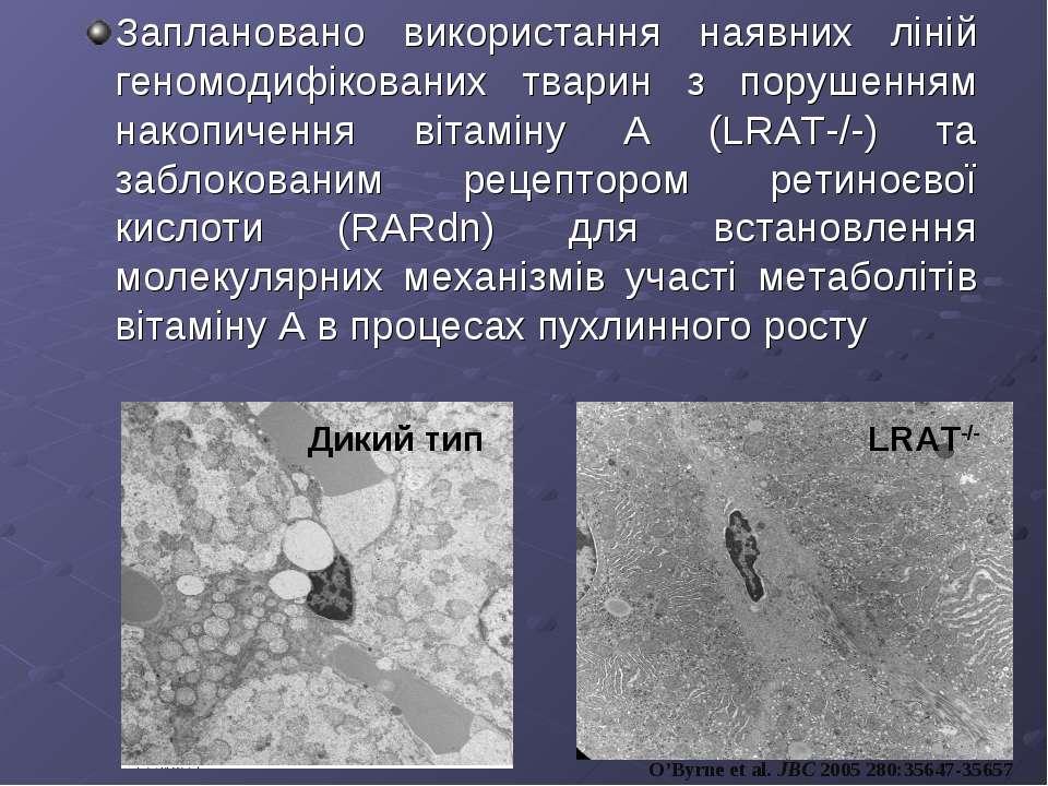 Заплановано використання наявних ліній геномодифікованих тварин з порушенням ...